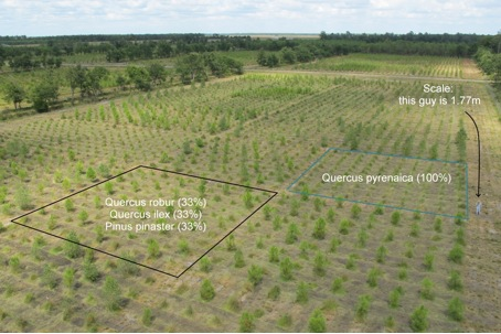 Figure 1: Overview of the ORPHEE experiment showing two examples of plots corresponding to two different tree species assemblages.
