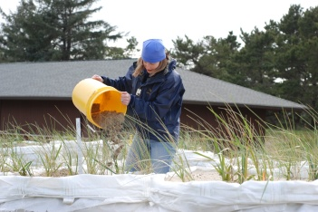 Sand supply in beach grass mesocosm experiment