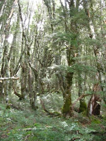 takahevalleyforest-dale