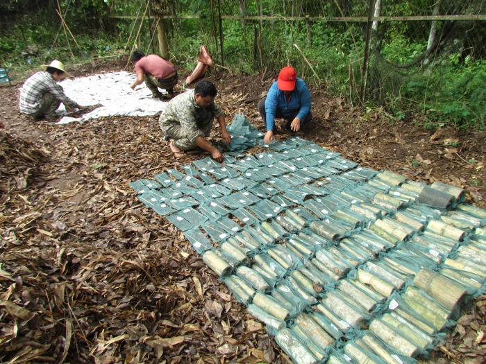 One of the tropical litterbed blocks for comparing wood decomposability of many bamboo and eudicot species_ 2012.