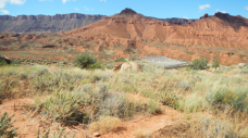 Drought resistance of three dominant dryland plants, David L. Hoover et al. http://dx.doi.org/10.1111/1365-2745.12647