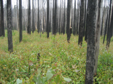 Enhanced cycling of C and N after wildfire, Feike A. Dijkstra et al. http://dx.doi.org/10.1111/1365-2745.12663