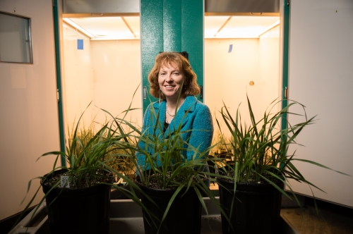 Carolyn Malmstrom, associate professor of plant biology, poses in front of a growth chamber on Monday February 11, 2013.