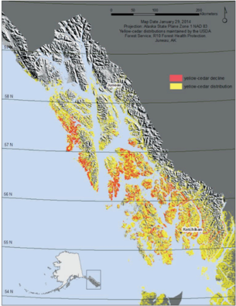 Yellow-cedar distribution (yellow) and decline (red) in southeast Alaska. Credit: U.S. Forest Service