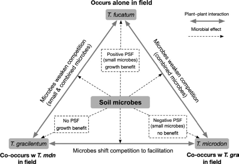 Siefert_et_al-2018-Journal_of_Ecology