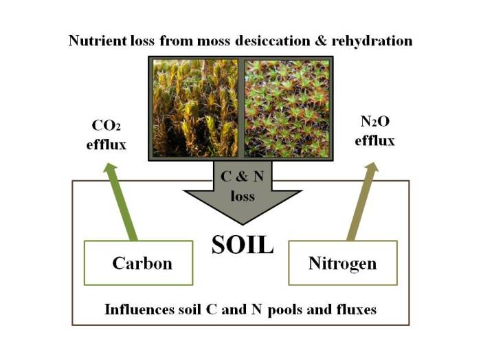 Moss Rehydration Can Influence Soil Carbon And Nitrogen