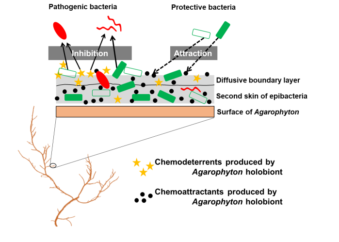 microbial_gardening