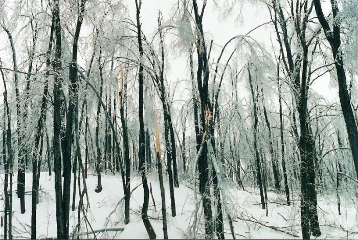 1998_ice_storm_Aylmer_Quebec_Canada_(3)