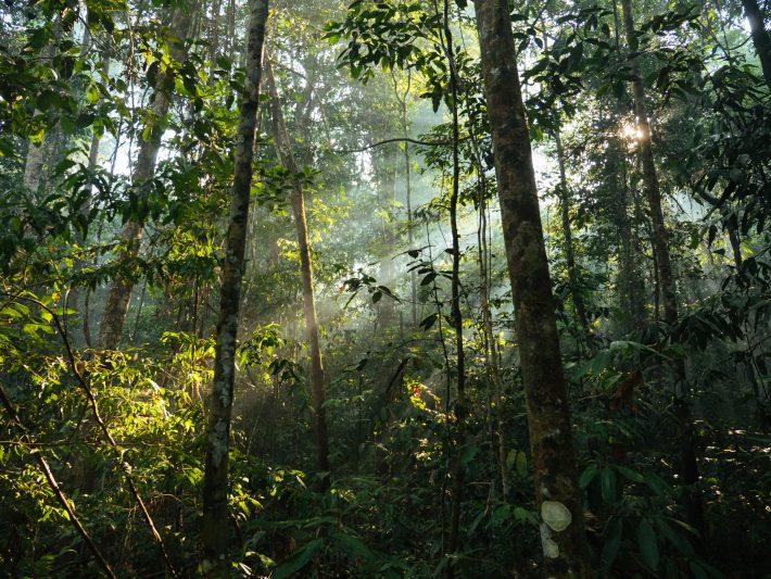 hawes - Disturbed-tropical-forest-in-the-Brazilian-Amazon-Adam-Ronan-Rede-Amazônia-Sustentável