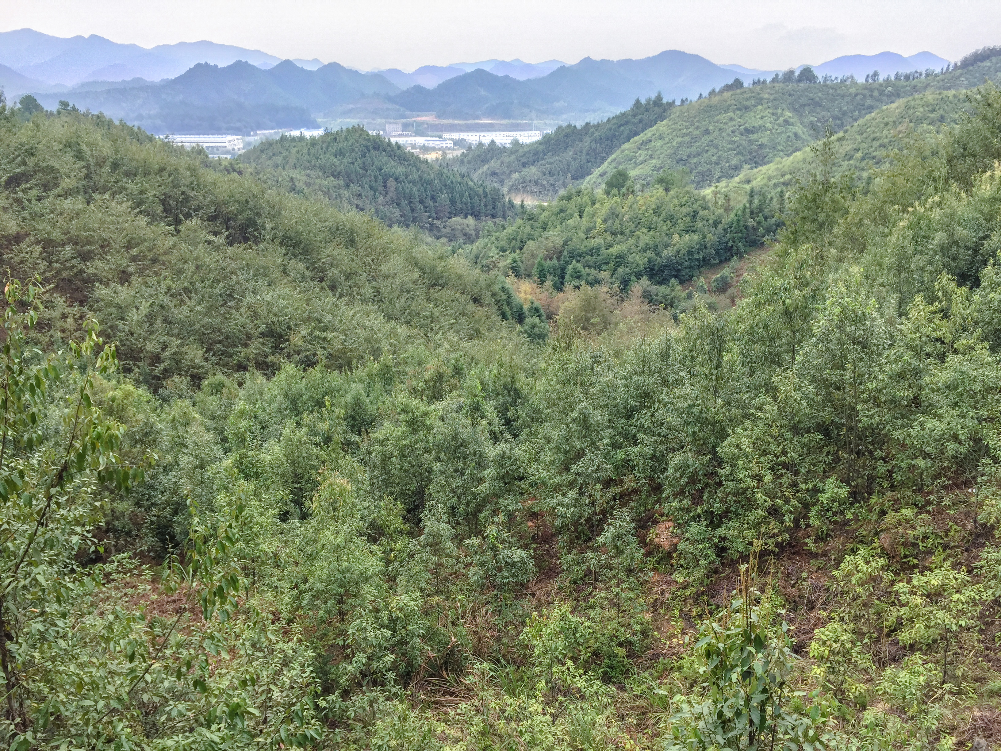 Fig5BEF-China